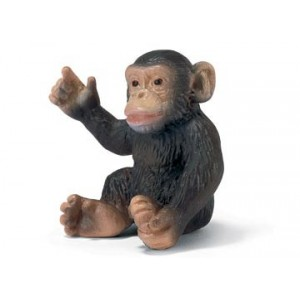 Chimpanzee Cub