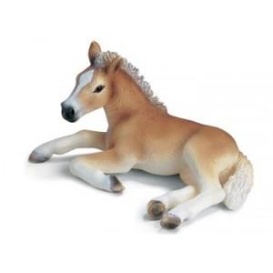 Hafling Foal