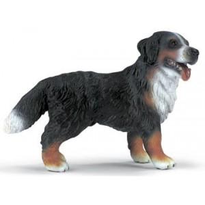 Bernese Mountain Dog standing