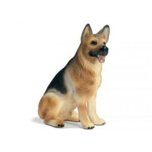 German Shepherd, male