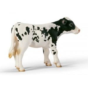 Holstein Calf